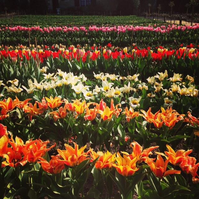 fleurs chenonceau